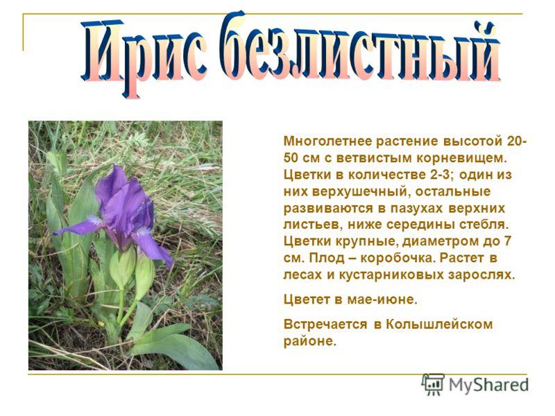 Многолетнее растение высотой 20- 50 см с ветвистым корневищем. Цветки в количестве 2-3; один из них верхушечный, остальные развиваются в пазухах верхних листьев, ниже середины стебля. Цветки крупные, диаметром до 7 см. Плод – коробочка. Растет в леса