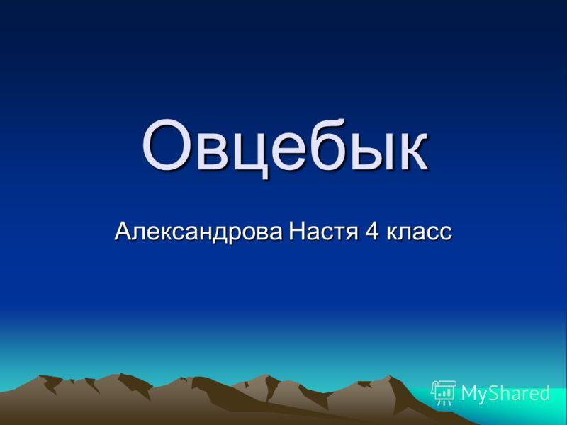 Овцебык Александрова Настя 4 класс