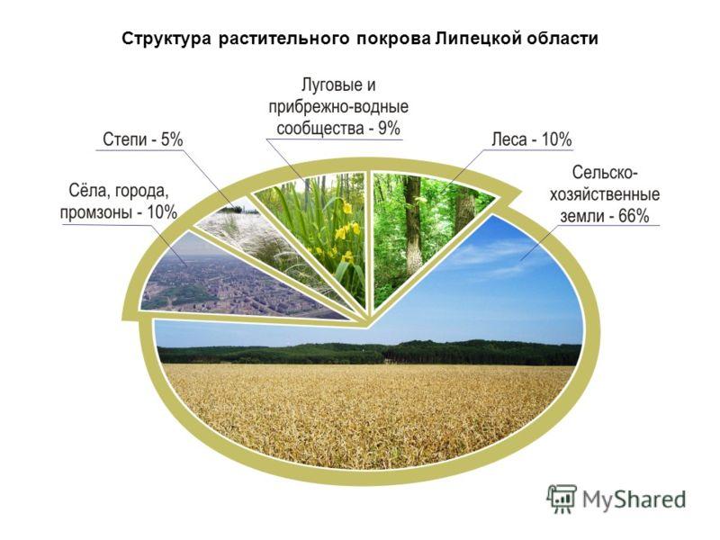 Структура растительного покрова Липецкой области