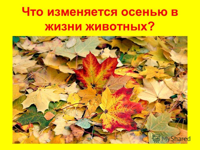Осенью в жизни животных животные