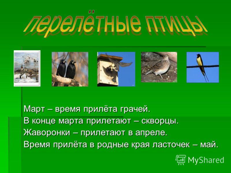 Март – время прилёта грачей. В конце марта прилетают – скворцы. Жаворонки – прилетают в апреле. Время прилёта в родные края ласточек – май.