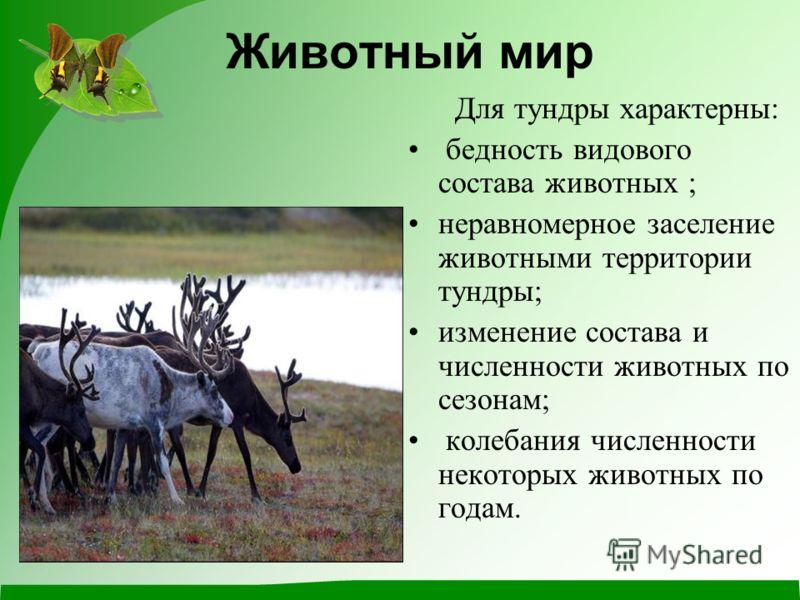 Животный мир Для тундры характерны: бедность видового состава животных ; неравномерное заселение животными территории тундры; изменение состава и численности животных по сезонам; колебания численности некоторых животных по годам.