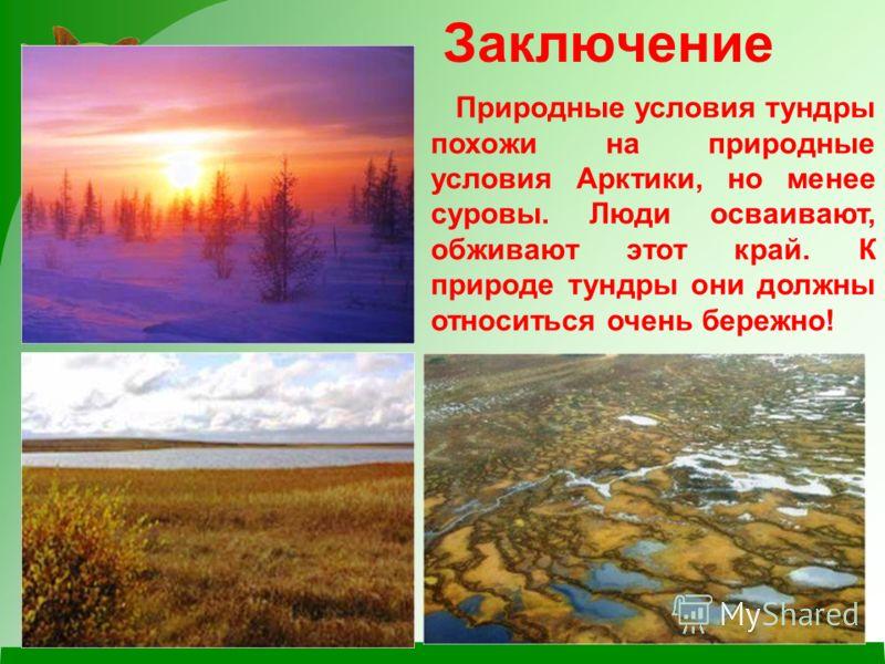 Природные условия тундры похожи на природные условия Арктики, но менее суровы. Люди осваивают, обживают этот край. К природе тундры они должны относиться очень бережно! Заключение