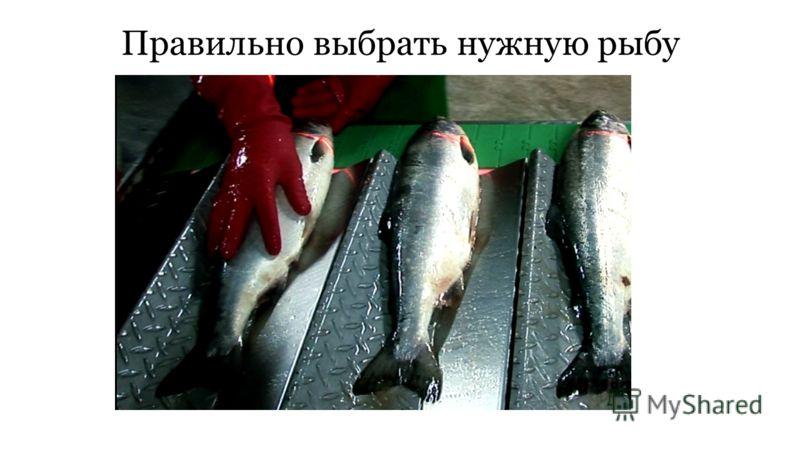 Правильно выбрать нужную рыбу