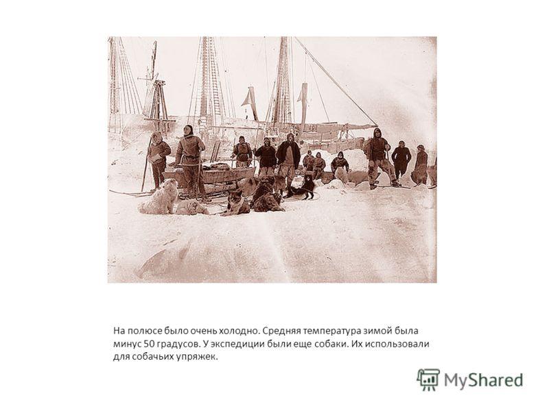 На полюсе было очень холодно. Средняя температура зимой была минус 50 градусов. У экспедиции были еще собаки. Их использовали для собачьих упряжек.