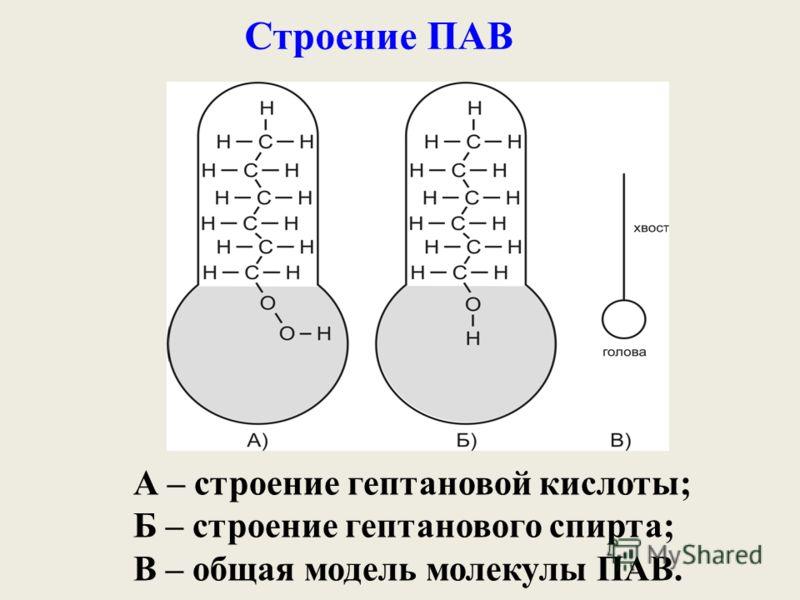 Строение ПАВ А – строение гептановой кислоты; Б – строение гептанового спирта; В – общая модель молекулы ПАВ.