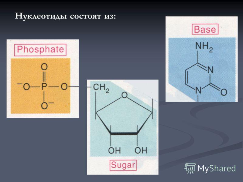 Нуклеотиды состоят из: