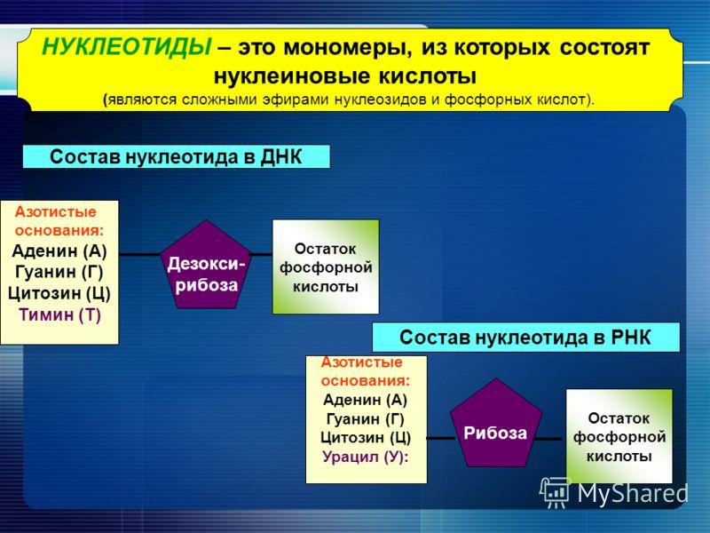 НУКЛЕОТИДЫ – это мономеры, из которых состоят нуклеиновые кислоты (являются сложными эфирами нуклеозидов и фосфорных кислот). Состав нуклеотида в ДНК Азотистые основания: Аденин (А) Гуанин (Г) Цитозин (Ц) Тимин (Т) Дезокси- рибоза Остаток фосфорной к