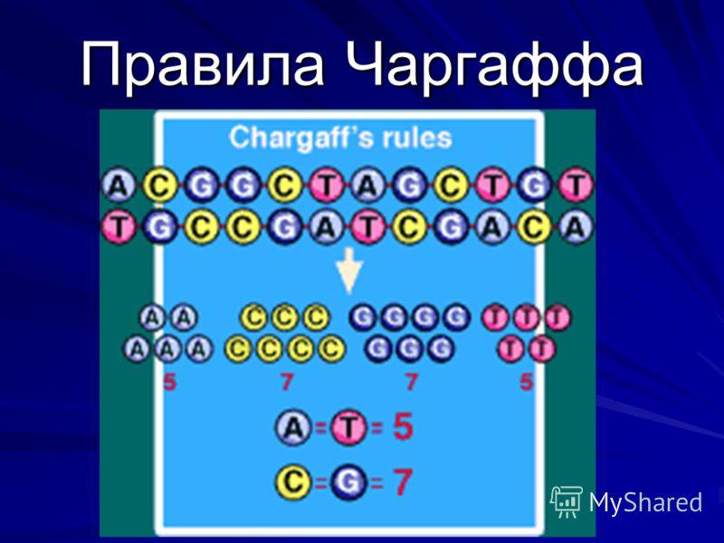 Правила Чаргаффа