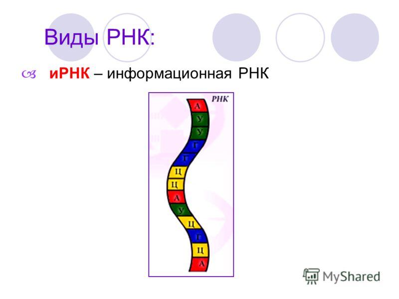 Виды РНК: иРНК – информационная РНК