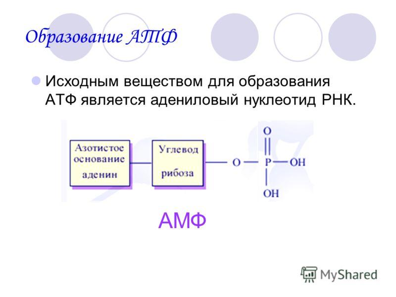 Образование АТФ Исходным веществом для образования АТФ является адениловый нуклеотид РНК. АМФ