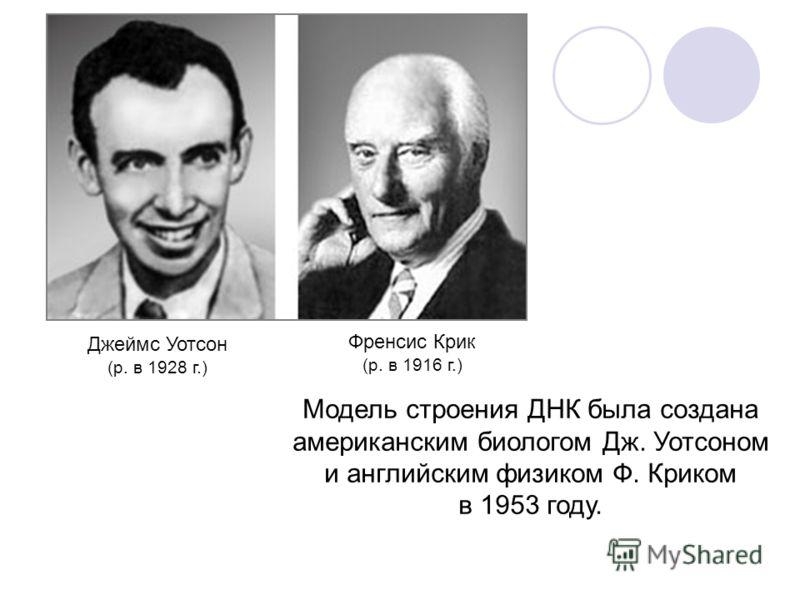 Модель строения ДНК была создана американским биологом Дж. Уотсоном и английским физиком Ф. Криком в 1953 году. Джеймс Уотсон (р. в 1928 г.) Френсис Крик (р. в 1916 г.)