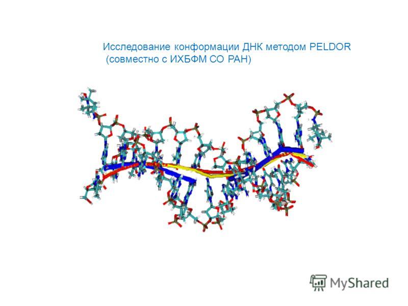 Иccледование конформации ДНК методом PELDOR (совместно с ИХБФМ СО РАН)