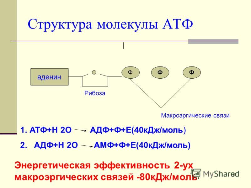 АТФ относится к так называемым макроэргическим соединениям, то есть к химическим соединениям, содержащим связи, при гидролизе которых происходит освобождение значительного количества энергии.макроэргическим соединениямгидролизе 17