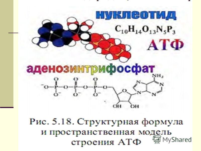 18 Структура молекулы АТФ аденин ФФФ Рибоза Макроэргические связи 1.АТФ+Н 2О АДФ+Ф+Е(40кДж/моль) 2. АДФ+Н 2О АМФ+Ф+Е(40кДж/моль) Энергетическая эффективность 2-ух макроэргических связей -80кДж/моль