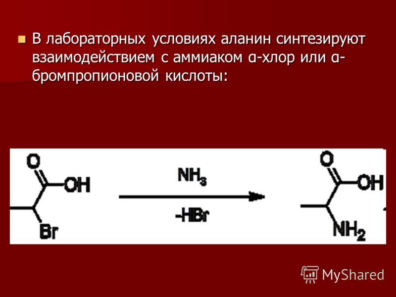 В лабораторных условиях аланин синтезируют взаимодействием с аммиаком α-хлор или α- бромпропионовой кислоты: В лабораторных условиях аланин синтезируют взаимодействием с аммиаком α-хлор или α- бромпропионовой кислоты: