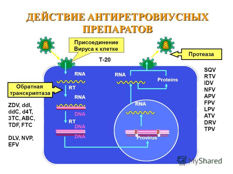 RT Provirus Proteins RNA RT Протеаза Обратная транскриптаза RNA DNA ДЕЙСТВИЕ АНТИРЕТРОВИУСНЫХ ПРЕПАРАТОВ ZDV, ddI, ddC, d4T, 3TC, ABC, TDF, FTC DLV, NVP, EFV SQV RTV IDV NFV APV FPV LPV ATV DRV TPV Присоединение Вируса к клетке Т-20