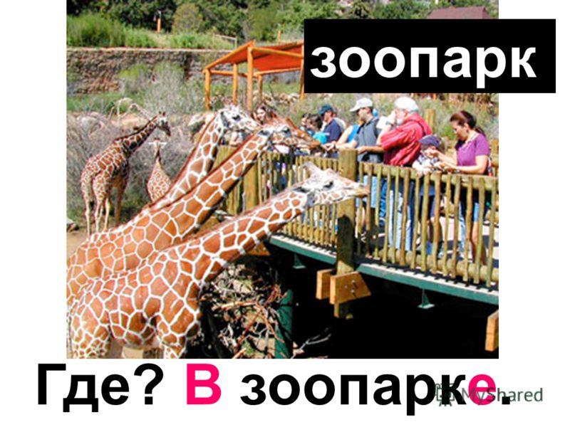 зоопарк Где? В зоопарке.