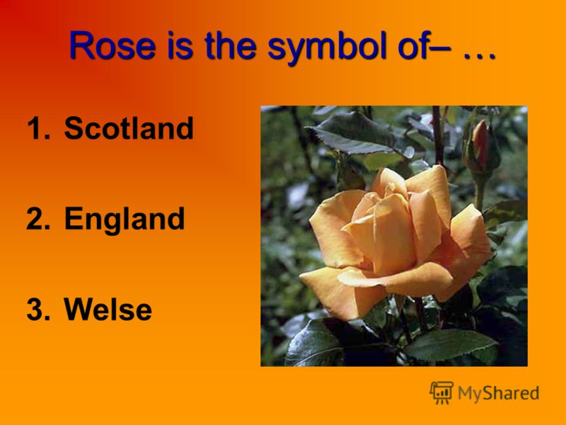 Rose is the symbol of– … 1.Scotland 2.England 3.Welse