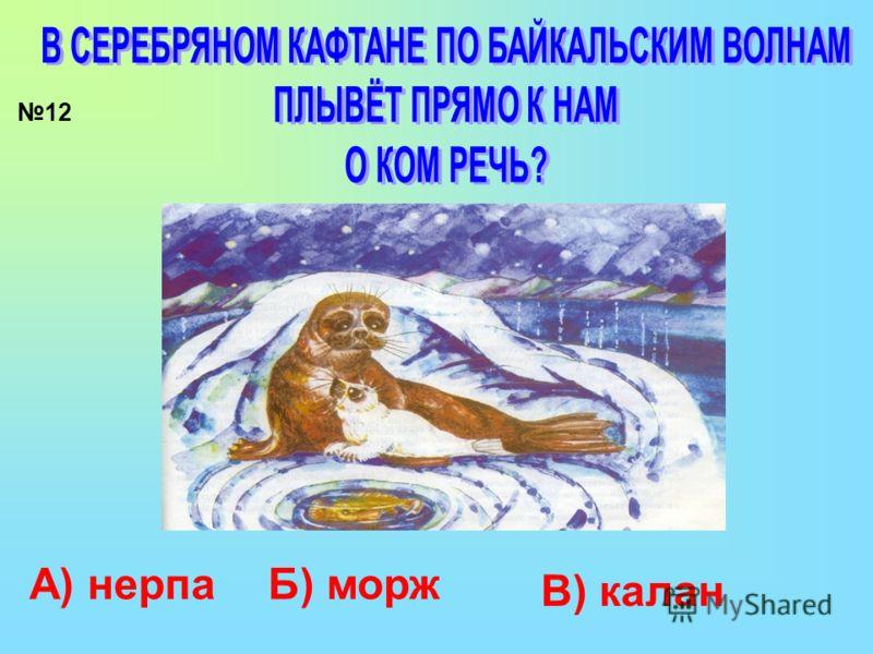 12 А) нерпаБ) морж В) калан