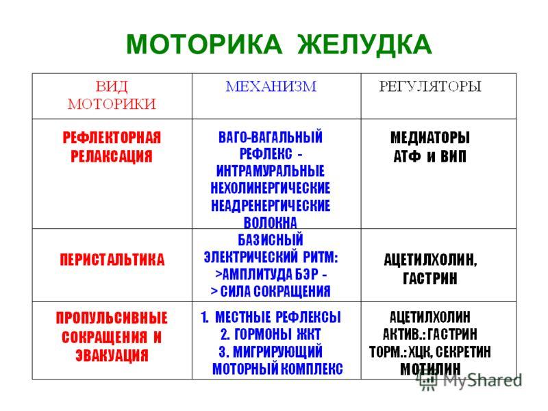 МОТОРИКА ЖЕЛУДКА