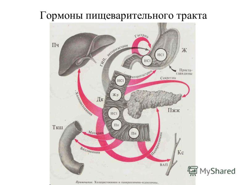 Гормоны пищеварительного тракта