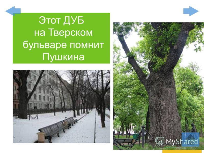 Этот ДУБ на Тверском бульваре помнит Пушкина