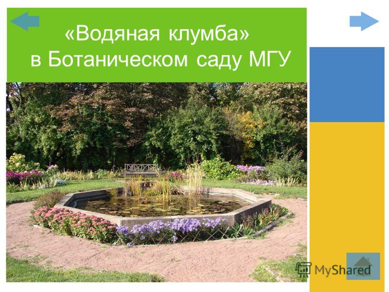 «Водяная клумба» в Ботаническом саду МГУ