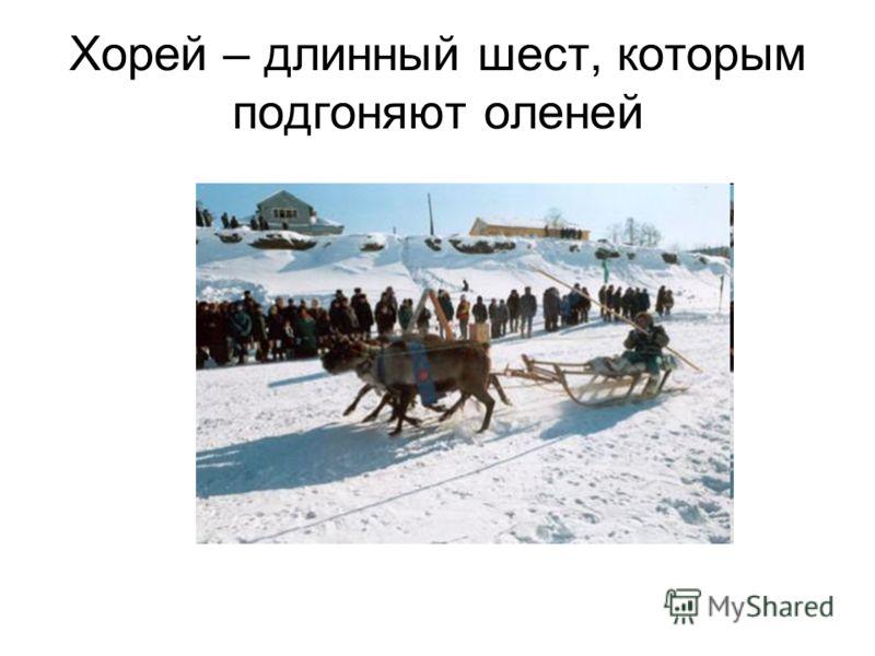 Хорей – длинный шест, которым подгоняют оленей