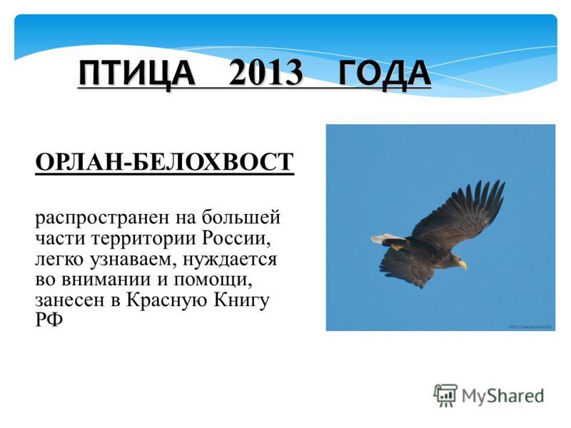 ОРЛАН-БЕЛОХВОСТ распространен на большей части территории России, легко узнаваем, нуждается во внимании и помощи, занесен в Красную Книгу РФ ПТИЦА 2013 ГОДА