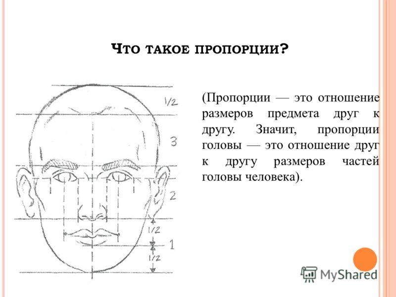 Ч ТО ТАКОЕ ПРОПОРЦИИ ? (Пропорции это отношение размеров предмета друг к другу. Значит, пропорции головы это отношение друг к другу размеров частей головы человека).