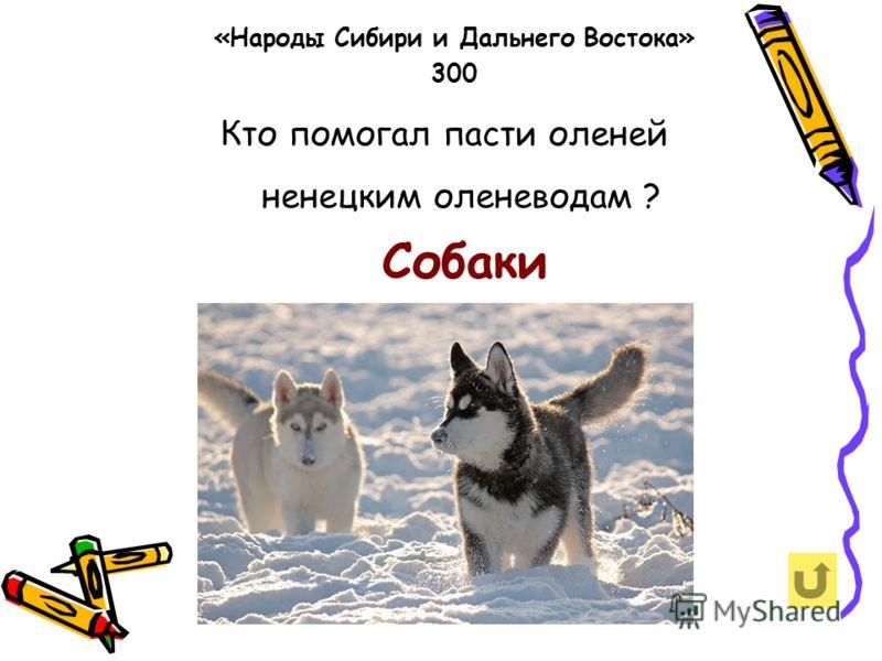 Кто помогал пасти оленей ненецким оленеводам ? «Народы Сибири и Дальнего Востока» 300 Собаки