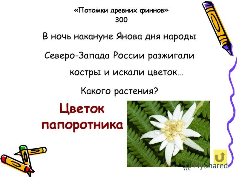 В ночь накануне Янова дня народы Северо-Запада России разжигали костры и искали цветок… Какого растения? «Потомки древних финнов» 300 Цветок папоротника