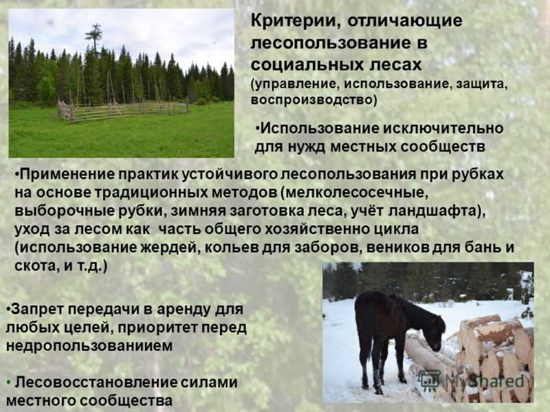 Критерии, отличающие лесопользование в социальных лесах (управление, использование, защита, воспроизводство) Применение практик устойчивого лесопользования при рубках на основе традиционных методов (мелколесосечные, выборочные рубки, зимняя заготовка