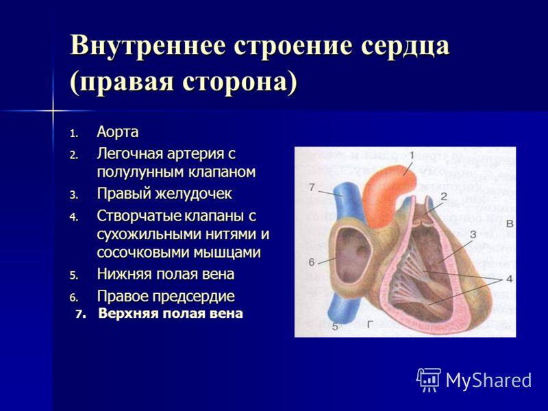 Пользуясь рисунком 53 ( Г) стр 111 обозначьте на схеме части сердца