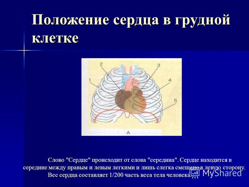 Тема урока: «Сердце. Работа сердца.»