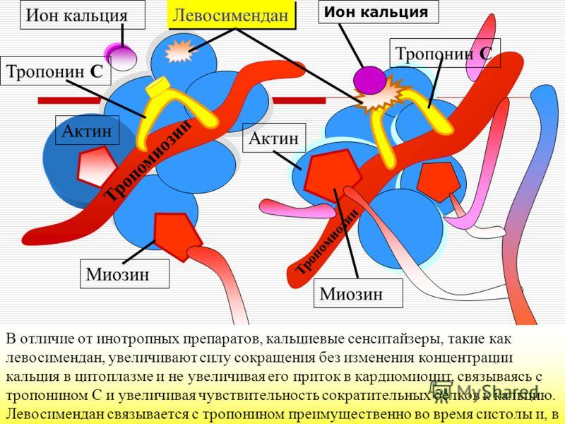 Тропонин C Ион кальция Актин Миозин Тропомиозин Левосимендан В отличие от инотропных препаратов, кальциевые сенситайзеры, такие как левосимендан, увеличивают силу сокращения без изменения концентрации кальция в цитоплазме и не увеличивая его приток в