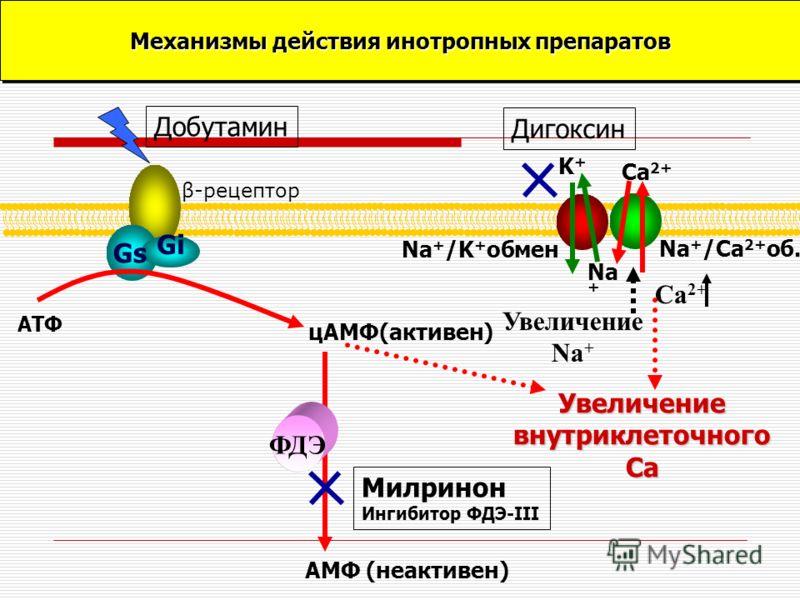 Gs Gi β-рецептор Na + /Ca 2+ об. Na + /K + обмен АТФ цАМФ(активен) АМФ (неактивен) ФДЭ Увеличение внутриклеточного Са Ca 2+ Na + K+K+ Добутамин Милринон Ингибитор ФДЭ-III Дигоксин Механизмы действия инотропных препаратов Увеличение Na + Ca 2+