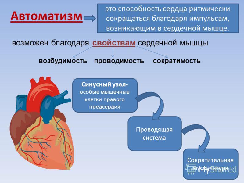 2.Опыт оживления изолированного сердца человека впервые в мире был успешно проведён русским учёным Кулябко А. А. в 1902 г. – оживил сердце ребёнка спустя 20 ч после смерти. 1.300 лет назад анатом А.Визалий вскрывал труп, чтобы установить причину смер