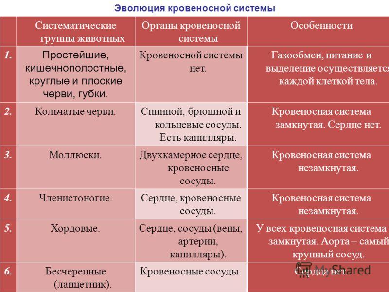 Систематические группы