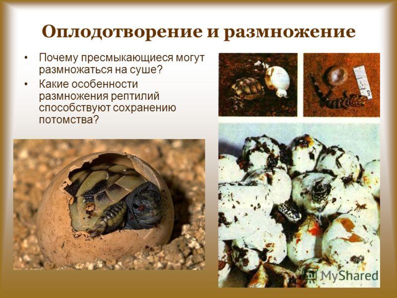 Оплодотворение и размножение Почему пресмыкающиеся могут размножаться на суше? Какие особенности размножения рептилий способствуют сохранению потомства?