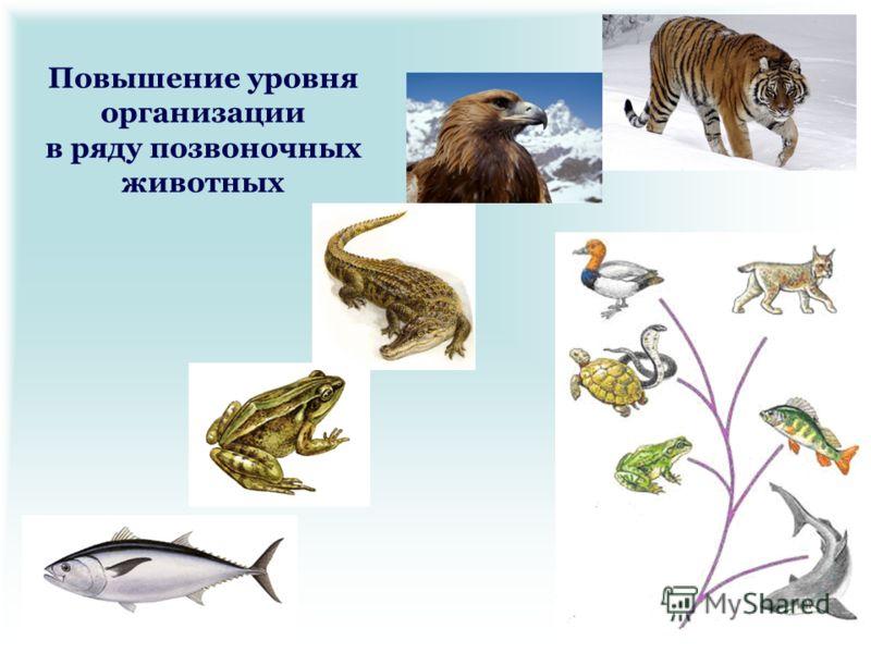 Повышение уровня организации в ряду позвоночных животных