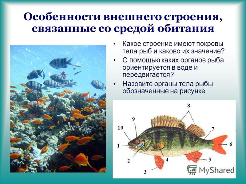 Особенности внешнего строения, связанные со средой обитания Какое строение имеют покровы тела рыб и каково их значение? С помощью каких органов рыба ориентируется в воде и передвигается? Назовите органы тела рыбы, обозначенные на рисунке.