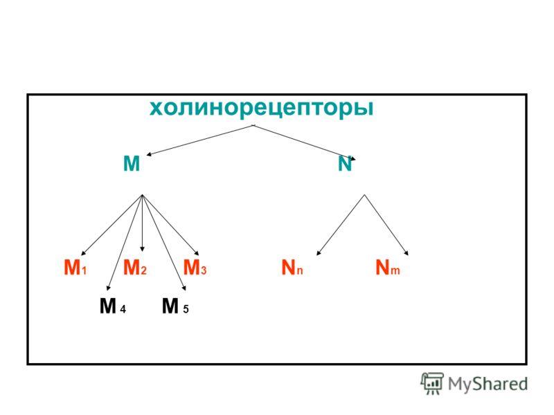 холинорецепторы M N М 1 М 2 М 3 N n N m M 4 M 5