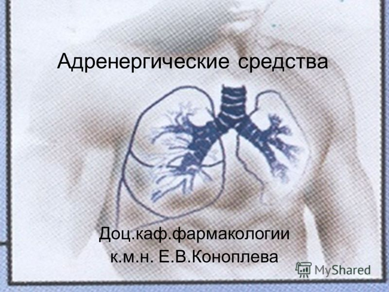Адренергические средства Доц.каф.фармакологии к.м.н. Е.В.Коноплева