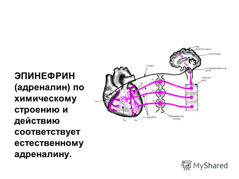 ЭПИНЕФРИН (адреналин) по химическому строению и действию соответствует естественному адреналину.