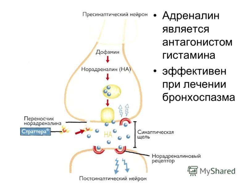 Адреналин является антагонистом гистамина эффективен при лечении бронхоспазма