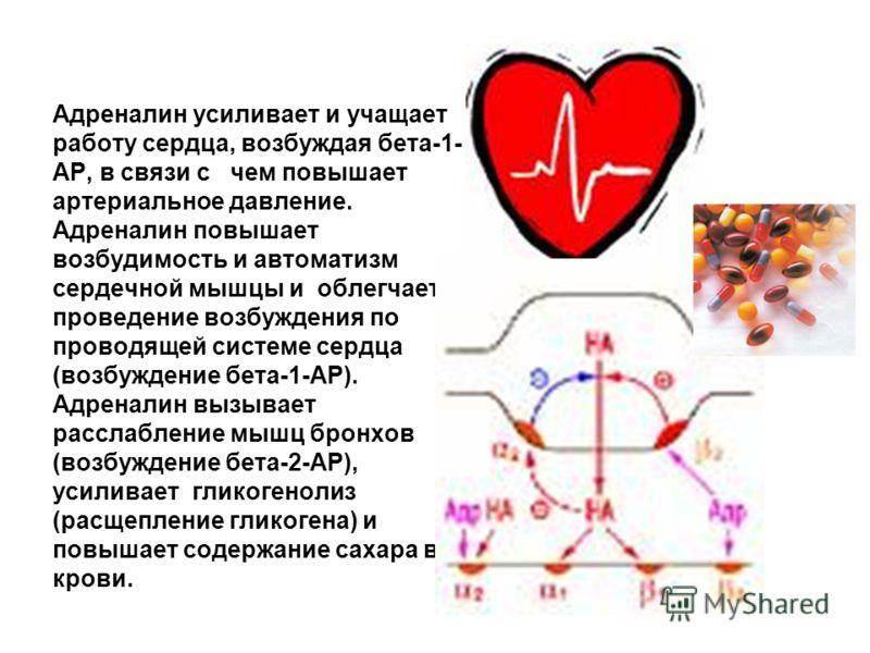 Адреналин усиливает и учащает работу сердца, возбуждая бета-1- АР, в связи с чем повышает артериальное давление. Адреналин повышает возбудимость и автоматизм сердечной мышцы и облегчает проведение возбуждения по проводящей системе сердца (возбуждение