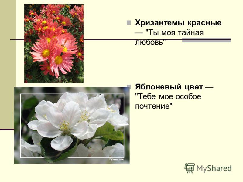 Хризантемы красные Ты моя тайная любовь Яблоневый цвет Тебе мое особое почтение