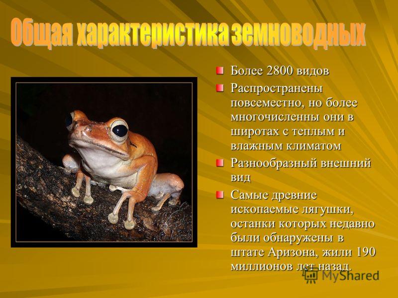 Более 2800 видов Распространены повсеместно, но более многочисленны они в широтах с теплым и влажным климатом Разнообразный внешний вид Самые древние ископаемые лягушки, останки которых недавно были обнаружены в штате Аризона, жили 190 миллионов лет